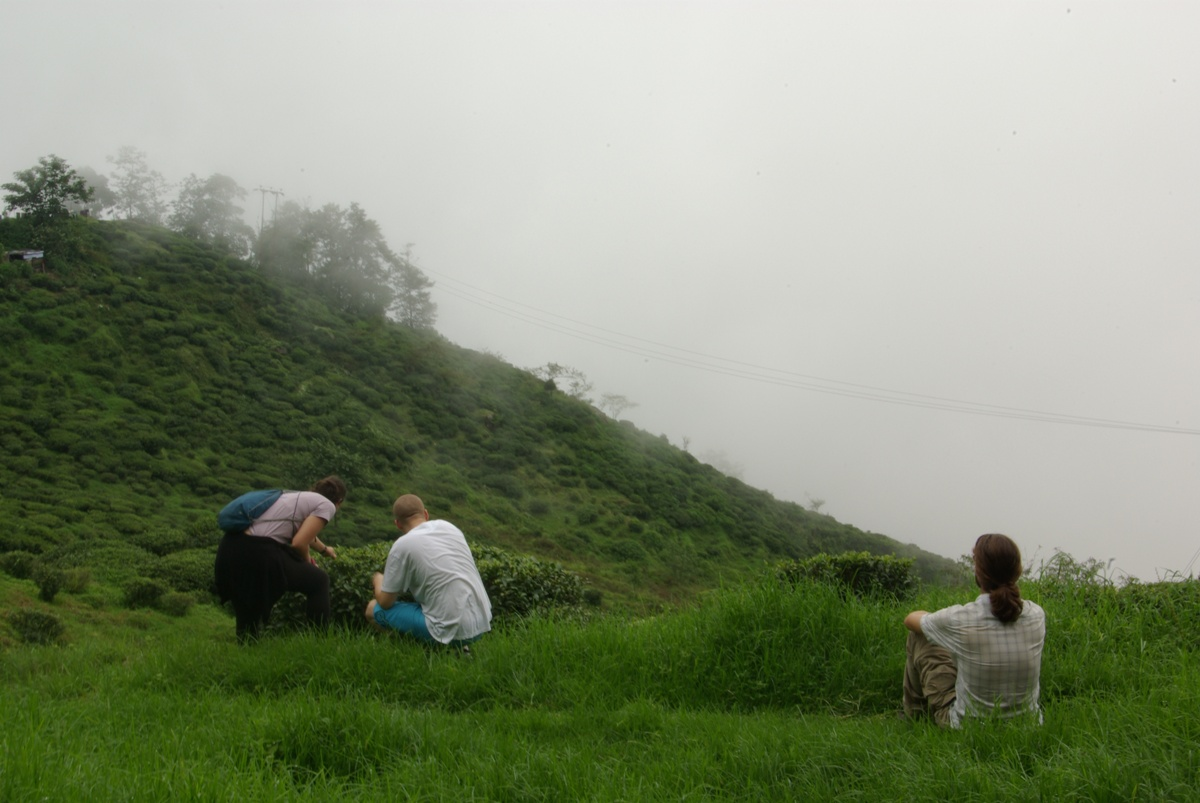 A oto i wzgórza z krzaczkami herbaty. Niestety, jak widać, chmury zaczęły się podnosić.
