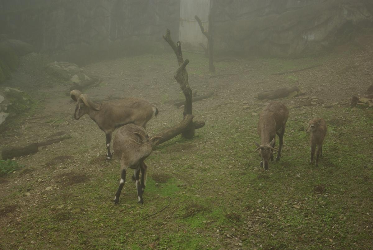 Ponownie kozy