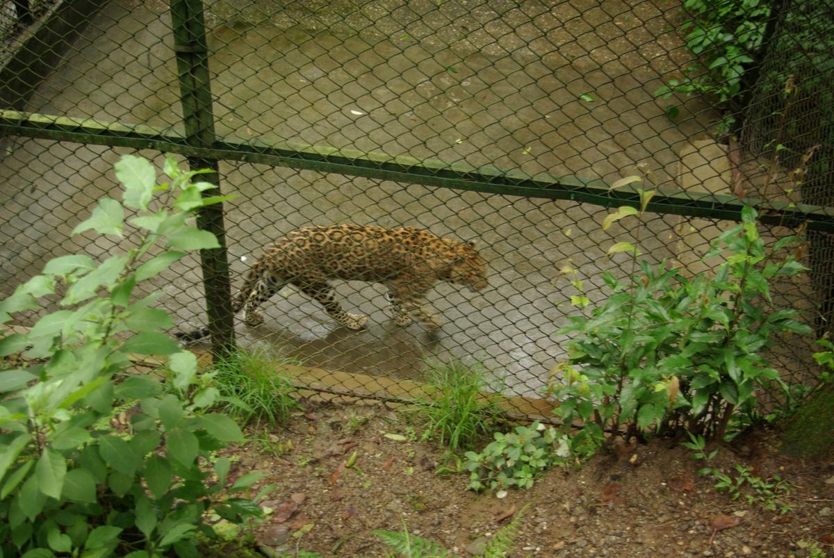 Gepard?