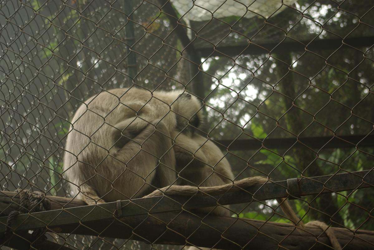 A na koniec śpiące małpki!