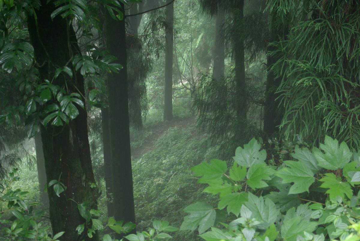 Las wokół Pelling