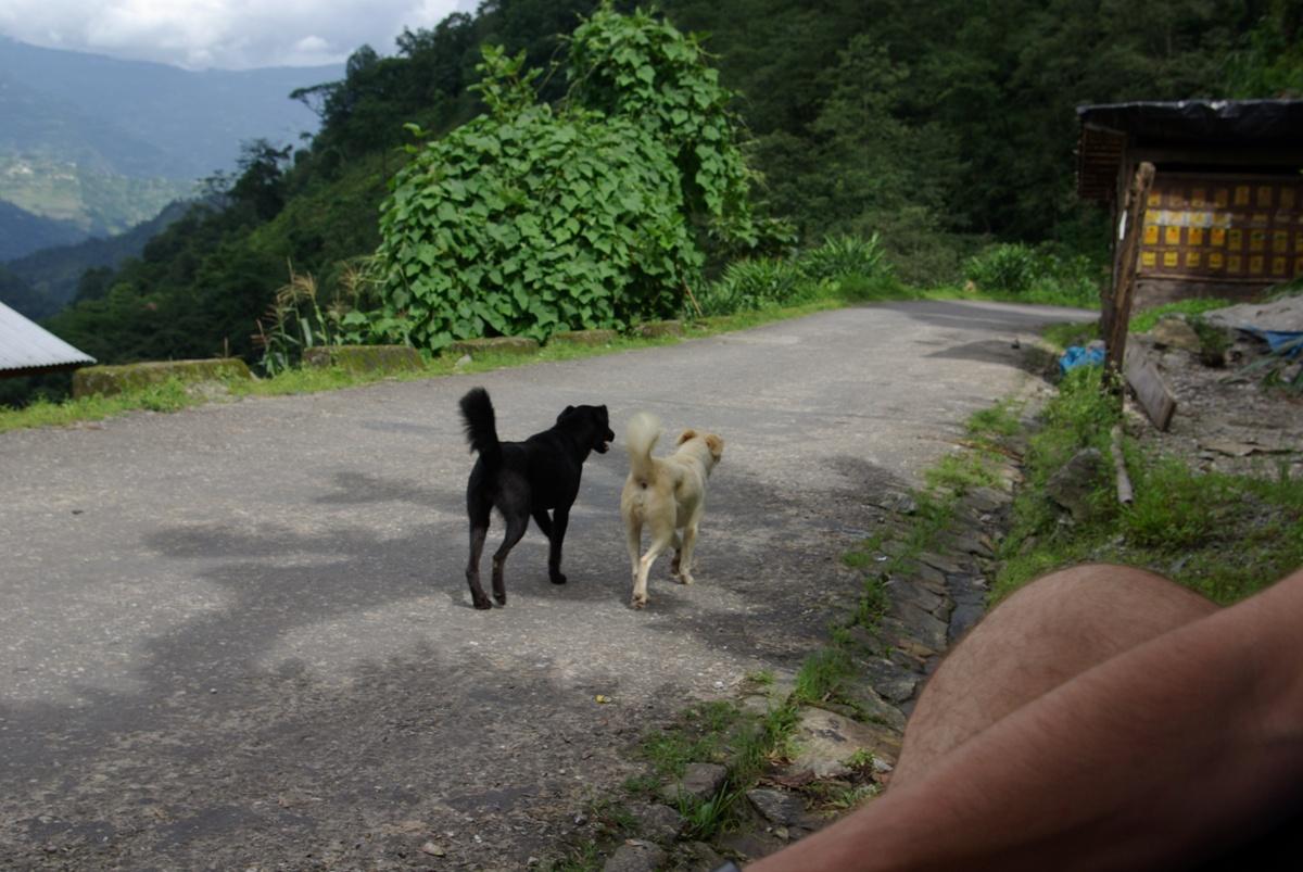 Psiaki dostały ode mnie bardzo wysublimowane imiona: Czarny i Biały ;)